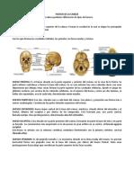 Anatomía Sistema Óseo