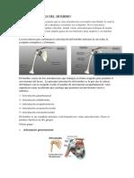 356914970-Articulaciones-Del-Hombro.docx
