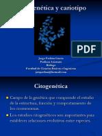Citogenética y Cariotipo
