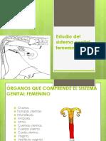 Estudio Del Sistema Genital Femenino
