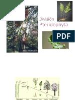 12 Pteridófitos 2019 (1)