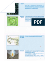 neurogenesis 002.pdf