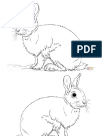 rabbits.pdf