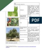 _Fichas de Identificación Flora Silvestre.pdf