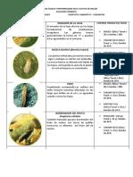 CONTROL DE PLAGAS Y ENFERMEDADES MELON syngenta.pdf