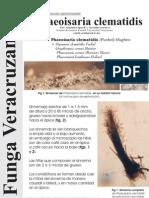 FUNGA VERACRUZANA Num.82 Phaeoisaria clematidis