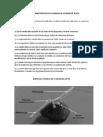 Principales Caracteristicas de La Semilla de La Palma de Aceite