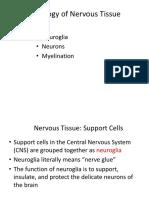 Nervous Histology