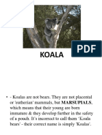 Koala Interesting Facts