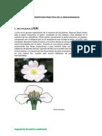 Informe 07 Botanica