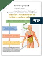 Absorción de Alimentos y Nutrientes
