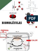 04BiomoleculasALUNOS (1)