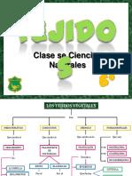 tejidosvegetales-111009103719-phpapp02.pdf