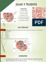 Anatomia Cèlula y Tejidos
