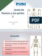 Osteologia 2 Axial Apendicular