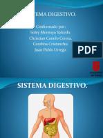 Sistema Digestivo.
