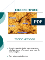 Tecido Nervoso (1)