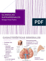anatomadeglndulassuprarrenales-171110033215