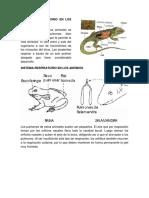 Sistema Respiratorio en los animales vertebrados