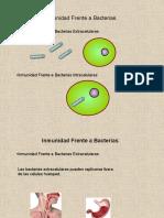L inmunologia frente a bacterias
