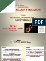 Bcm 19 Lisosomas,Degradacion,Muerte