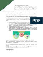Virus Del Papiloma H