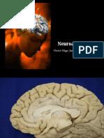 neuroanatomia-1211753598010996-9