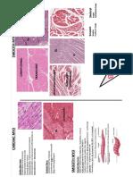 Smooth Cardiac Histology Slides