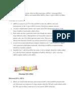 Types of Rna & Ribozymes