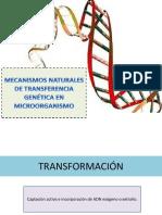 Mecanismos Naturales de Transferencia Genética en Microorganismo