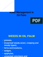 Weed Management in Oil Palm
