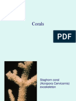 Coral Slideshow