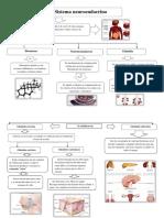 Organizador Visual Del Sistema Neuroendocrino