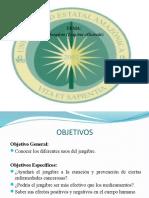 Informe-Jengibre.pptx