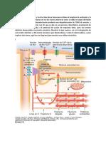 4)Acople Elctromecanico Priera Clase