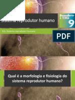 Dt9 Sistema Reprodutor Humano