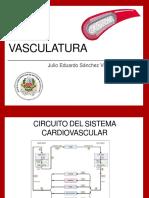 VASCULATURA.pptx