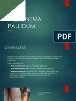 Treponema-PALIDUM
