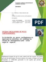 EXPOCISION FIOLOGIA.pptx