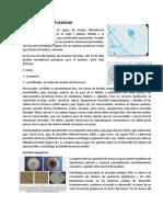 Fusarium, Gliodadium y Moniliophthora