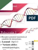 Gena PKD1
