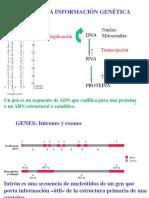 ADN Estructura