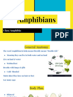 amphibians per