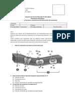 Evaluación 2 Ciencias Naturales 8° basico Membrana plasmatica