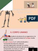 L'Organizzazione Del Corpo Umano