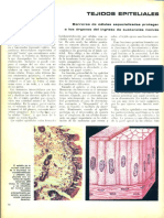 114 Ciencia Ilustrada Tejidos Epiteliales