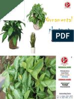 Ornamental Plants at NAAC