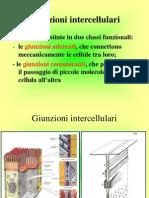 CITOLOGIA Lezione 4 Membrana-citoscheletro 29-10-09