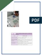 Informe- Microbiologia (Autoguardado)