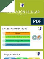Clase 1_Respiración Celular